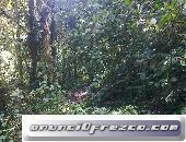 Regalo propiedad en Oriente Ecuador 15 hectarias