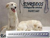 Curso peluqueria canina valencia
