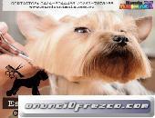 Escribe un tiTIENDA DE ANIMALES MARACAIBOtulo para tu anuncio...