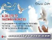 PALOMAS BLANCAS ALQUILER