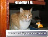 Gato perdido en Granada ( Robado en Zaidin de Zafra , recompensa 50 euros )