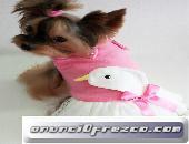 Abrigo de invierno para perros toy miniatura yorkshire chihuahua