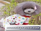 Pijamas perros chihuahua yorkshire toy mini cachorros