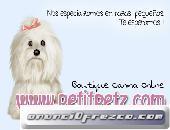 Pijamas perros chihuahua yorkshire toy mini cachorros 5