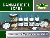 Cannabis medicinal para dolores crónicos.