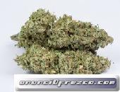 Tenemos marihuana medicinal de grado superior y aceites para pacientes y fumadores