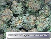 Grado a + marihuana medicinal (diesel amargo, Roca lunar, PIB, sueño azul, OG Kush) * aceite de cann