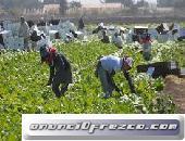 Se necesitan jornaleros para procesos de seleccion en recoleccion de fruta, verdura