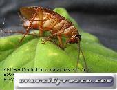 ANDRA Control De Plagas y Desinfección 5