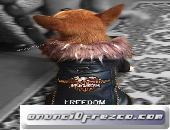Cazadora motera para perros chihuahua yorkshire toy miniatura