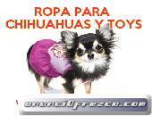 Cazadora motera para perros chihuahua yorkshire toy miniatura 3