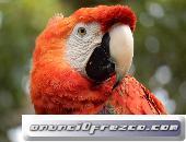 3 dias Rio Amazonas  Iquitos peru