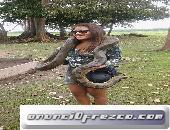 tour operador en iquitos  peru