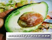 Dietista/Nutricionista colegiada