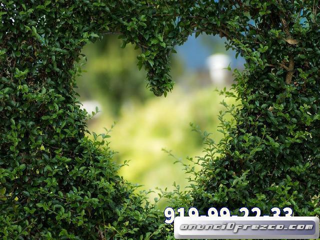 Amor y videncia 10 min 5 eur