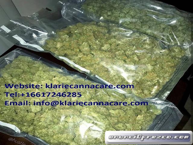 Buy weed online | Order cheap bulk Amnesia Haze | Weed for sale
