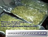 Buy weed online | Order cheap bulk Amnesia Haze | Weed for sale