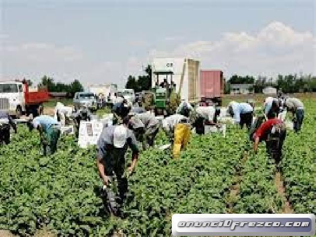 Se necesitan jornaleros para procesos de seleccion en recoleccion de fruta, verdura y hortalizas