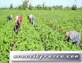 Se solicitan trabajadores para esta campaña de recolección de fruta y verdura