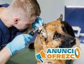 Veterinarios y Peluqueros caninos 2