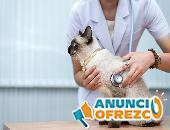 Veterinarios y Peluqueros caninos 4