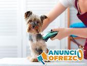 Veterinarios y Peluqueros caninos 5